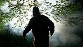Sasquatch, Bigfoot Encounter | Amazing