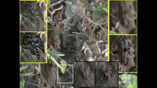 The Truth About Bigfoot One With The Trees