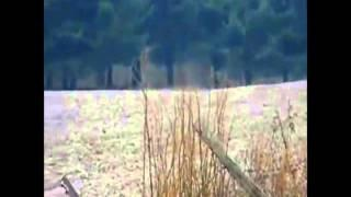 Bigfoot Caught on Film by Teen in Ohio (Stabilized)