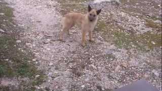 Αγνωστο ζωο στη Παρνηθα- Weird animal in Parnitha.