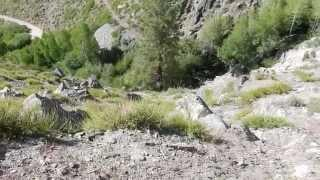 "Kings Canyon Nevada - Part 5 ""Lets Do This"""