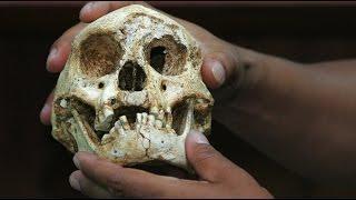 Do Hobbits Exist? Recent Sightings Of Homo Floresiensis