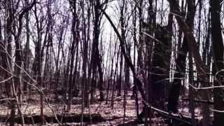 Bigfoot Sighting in Northern Michigan 2014 Breakdown